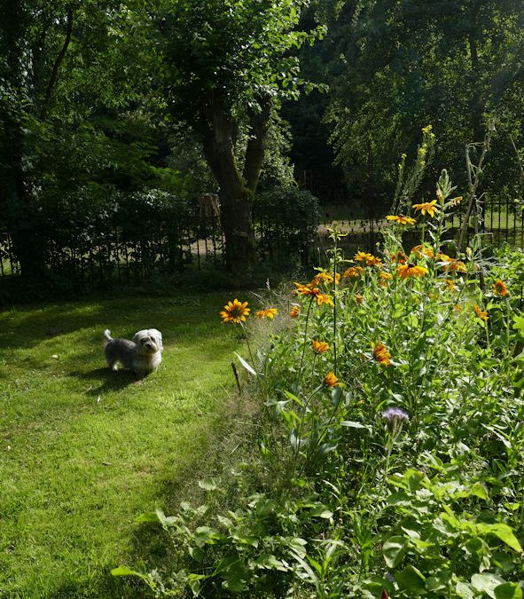 Wild and wonderful ~ vegetables, herbs, weeds, biodiversity and a small dog