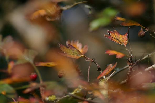 A riot of subtlety ~ Autumn alchemy