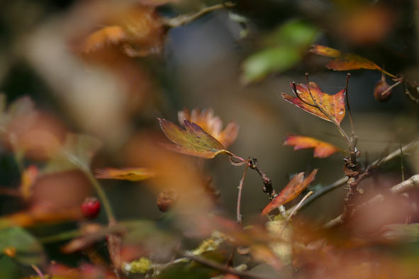 A riot of subtlety ~ Autumn alchemy